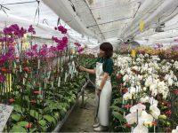 トレンド激しい花き業界で成長。若手集団の次なる一手とは