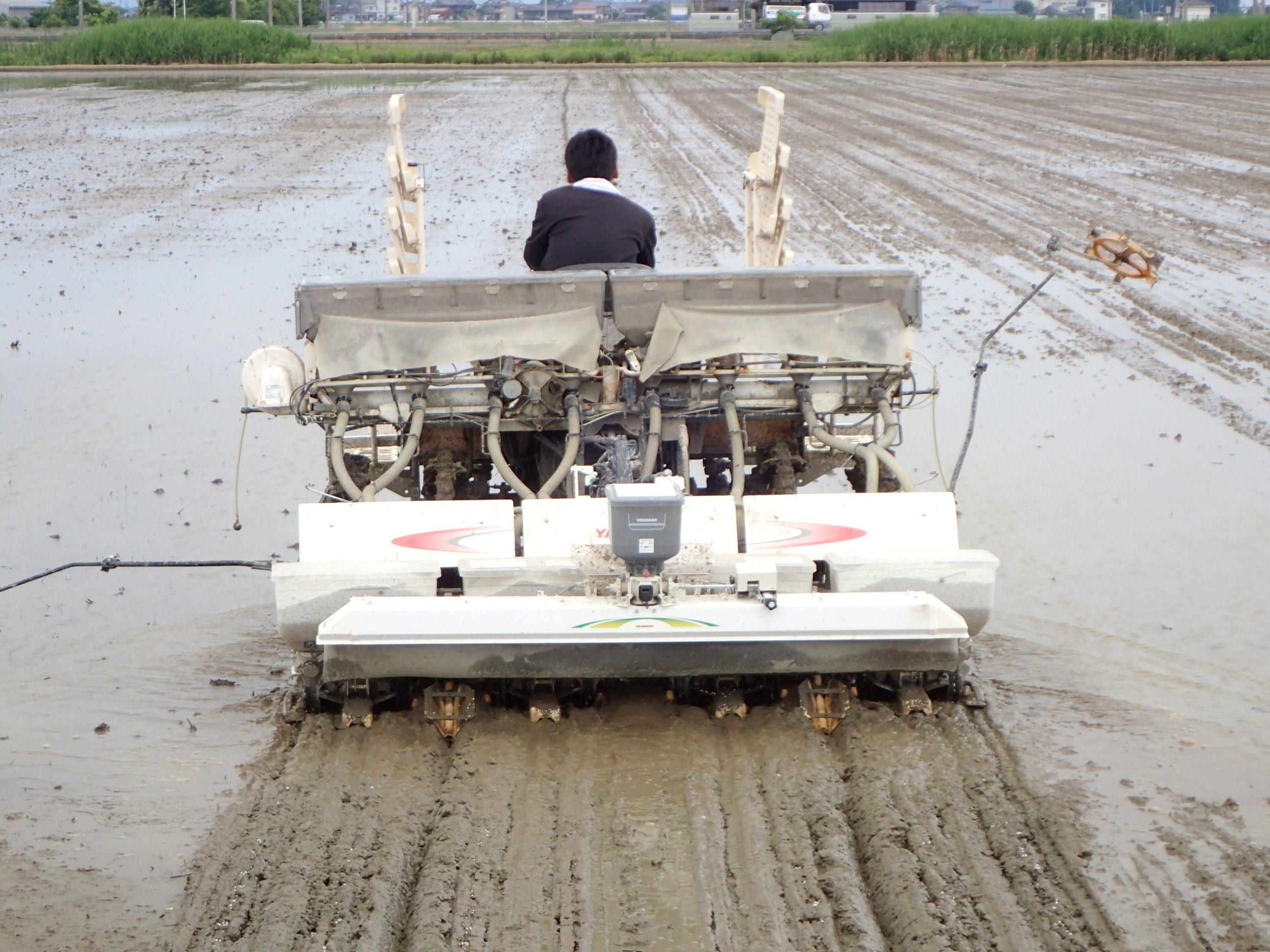 低コスト、省力で水田の雑草をイッソウ!? 大きくなったホタルイ・ノビエにも効く、直播に革新をもたらした除草剤とは