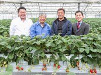 """土壌管理と施肥管理のノウハウを併せ持つ""""肥料メーカー""""が提案する『ジャット式イチゴ高設栽培システム』"""