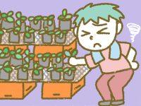 漫画「宮崎に移住した農家の嫁日記」【第99話】苗床増設