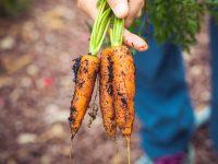 家庭菜園初心者に最適! 3月に植える野菜5選【畑は小さな大自然vol.72】