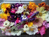 野菜、ハーブ、食用花200種類を栽培 農家がシェフに「提案する農業」を