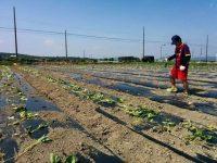 就農1年目でサツマイモを5000本植えて感じた7つのこと