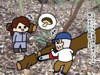 漫画「跡取りまごの百姓日記」【第46話】シイタケの収穫サイクル