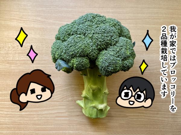 漫画「跡取りまごの百姓日記」【第47話】ブロッコリーの品種名