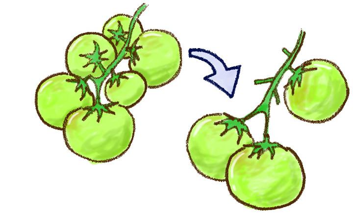 トマトの摘果・肥料・葉かき
