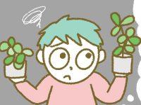 漫画「宮崎に移住した農家の嫁日記」【第105話】連棟ハウスと単棟ハウスの違い