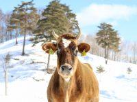 一本1188円! IT企業×酪農家が挑む日本一高い牛乳の未来