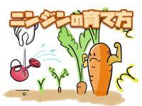 農家が教える人参(ニンジン)の育て方 栽培の出来は「種まき」で決まる!