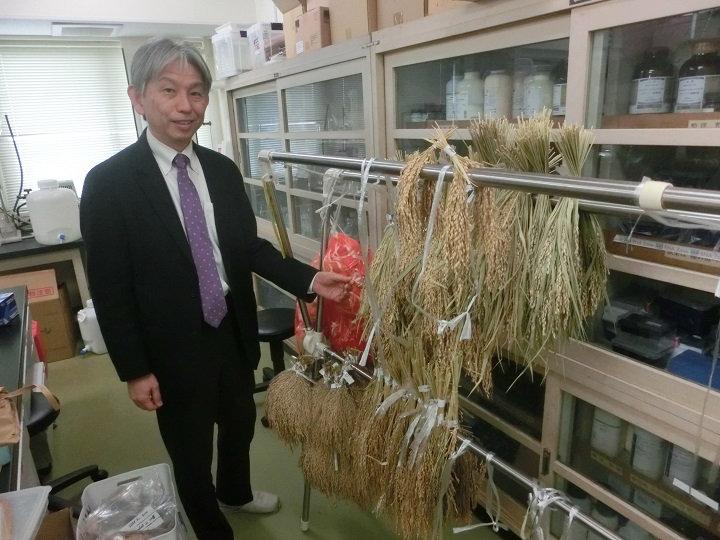 効果は農薬と同等以上! 種もみの温湯消毒で水稲の病害を防除する