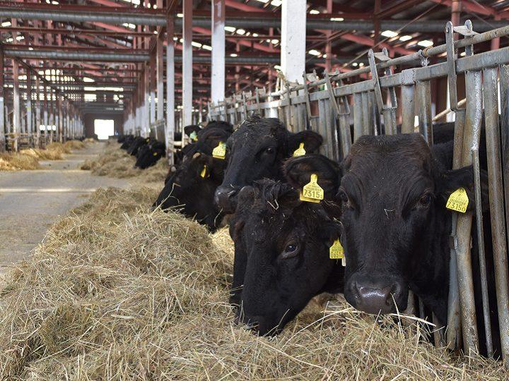 業界屈指の黒毛和牛繁殖農家で学ぶ、2泊3日のインターンシップ