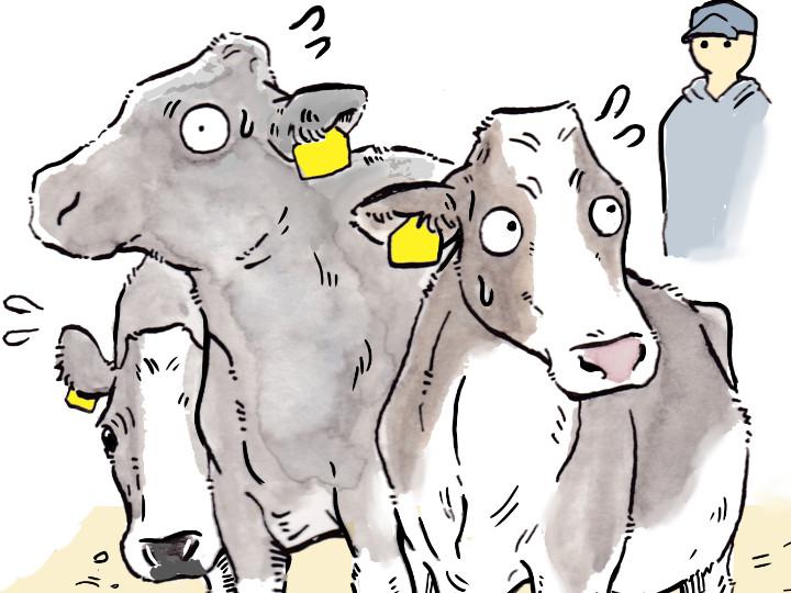 酪農漫画「うしだらけの日々」 第8話 警戒される日々