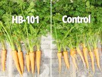 【HB-101⑤】天然植物活力液が植物本来の力を引き出す