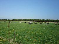 新しい牧場スタイルを積極的に実践! 家族形態牧場のエコな酪農を学べる