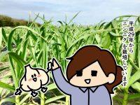 漫画「跡取りまごの百姓日記」【第50話】ニンニクのにおい