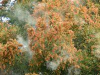 林業の専門家に聞いた「花粉の量は将来減らせるのか?」