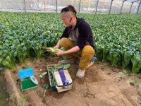 2020年、東京都心の農業に迫る! 江戸川「小松菜単品勝負」、目黒「高級住宅街の体験農園」