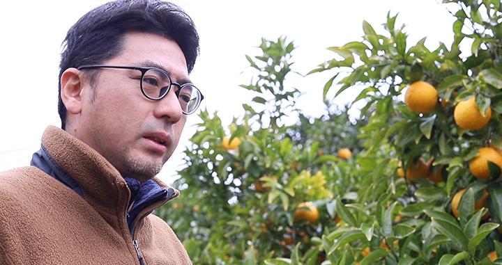 柑橘有機農業