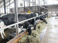 【酪農ヘルパー】トリマー志望だった動物好きな高校生が叩いた「酪農の門」
