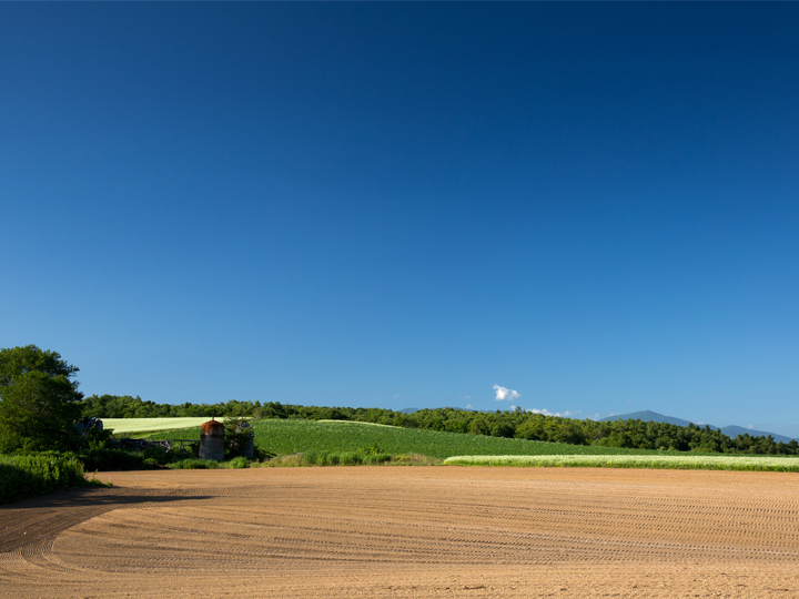 小さな畑が集まった大きな農園。独自の経営スタイルに触れるチャンス!