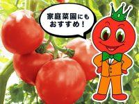 【ベランダで家庭菜園】本当におすすめしたい栄養や糖度が高いトマト編