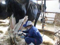 ファームステイで北海道の酪農を丸ごと体験!航空券補助あり