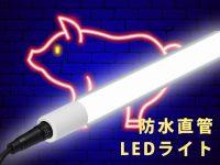 LED照明でブタの産子数が増える! 日本の養豚業を変える注目の最新研究をリポート