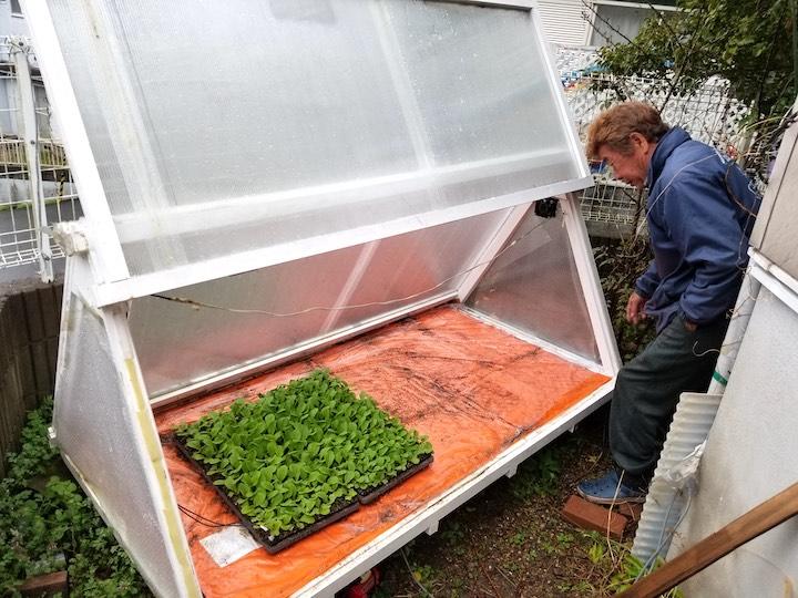 遅霜や寒の戻りに負けない 庭先にも置ける手作りミニ温室