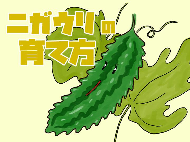 ゴーヤ 栽培 方法