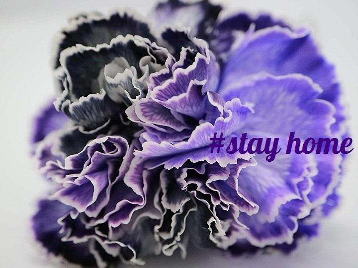 新型コロナ禍でも癒しを【母の日直前】鮮度抜群、農家直送!花のオンライン通販おすすめ3選