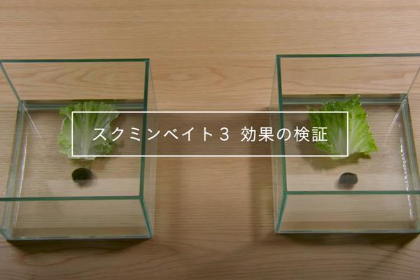 【動画で紹介】スクミリンゴガイ(ジャンボタニシ)の被害には、スクミンベイト3