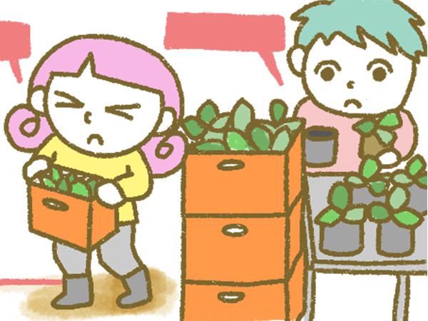 漫画「宮崎に移住した農家の嫁日記」【第114話】体力勝負の定植