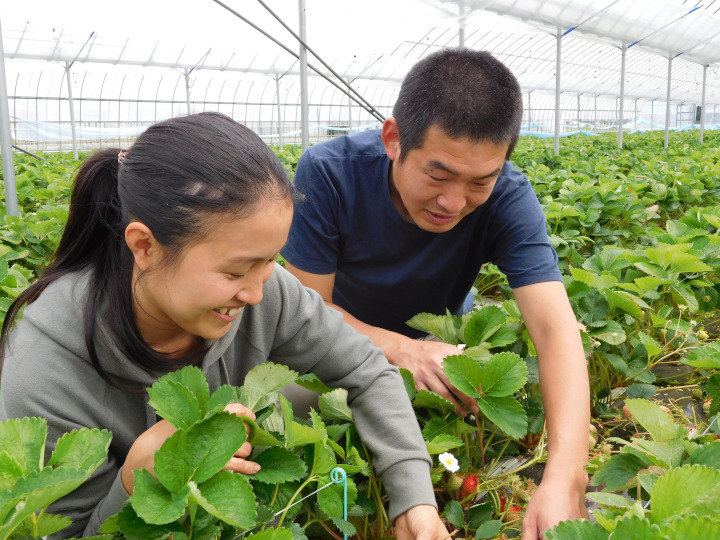 脱サラ新規就農者が感じる農協のメリット 収量が右肩上がりで増え続けるワケとは
