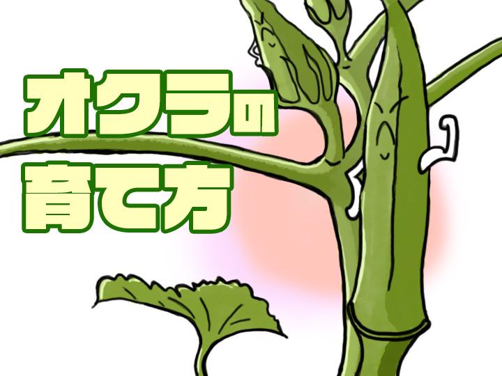 農家が教えるオクラの育て方 家庭菜園におすすめの夏野菜! カギは収穫のタイミング