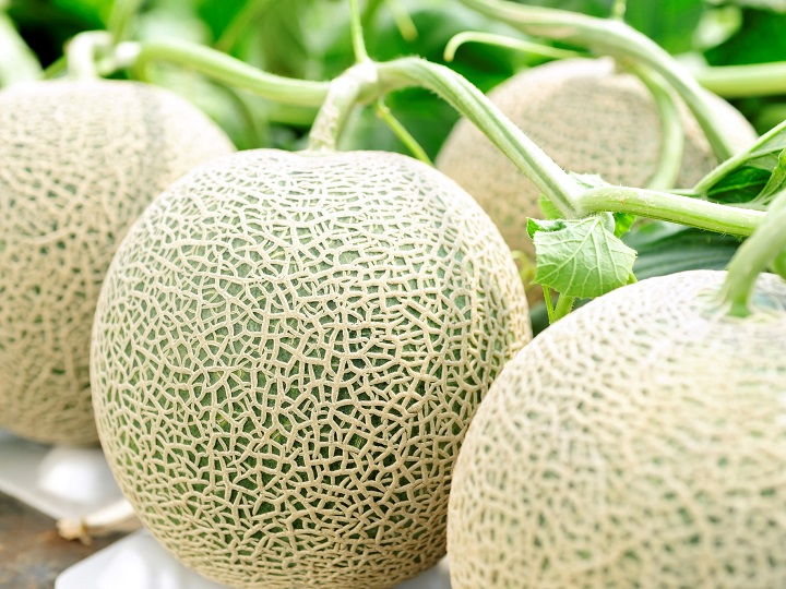 メロンの種類や品種ごとの特徴! おいしく食べる切り方や食べごろなどを紹介