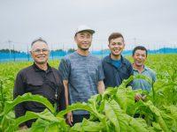 儲かる農業「葉たばこ農家」の実態とは!? 安定収入を見込める新たな農業の選択肢に