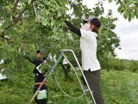 リンゴ農家育てる「大学院」、現役農家が独自研修を開講「南信州の産地を守る」