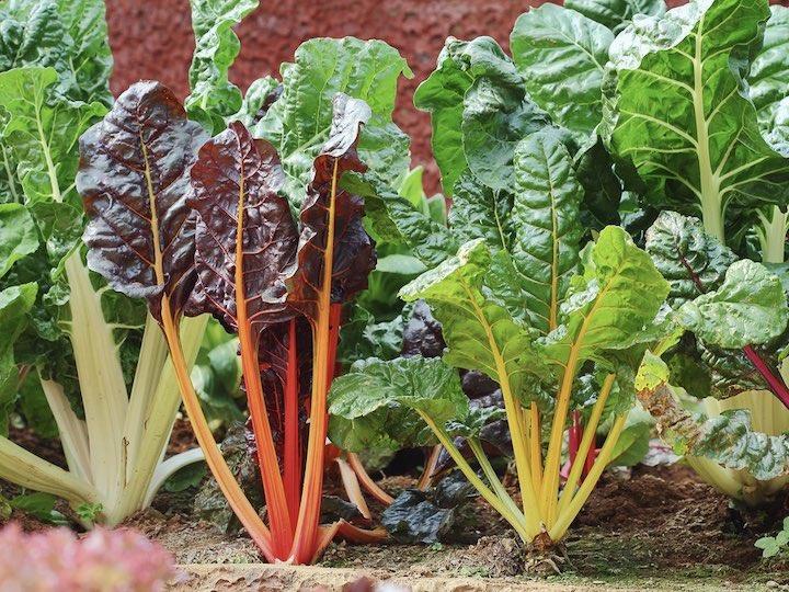 家庭菜園初心者にオススメ! 7月に植える野菜5選【畑は小さな大自然vol.83】
