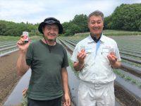 安定収入を支えるカゴメの契約栽培とは。生産者と共に目指す、国産加工用トマト生産の拡充