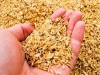 もみ殻と米ぬかを畑に使うときのポイントと注意点【畑は小さな大自然vol.82】