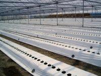 猛暑の高温対策や防虫に役立つ! おすすめ地温抑制マルチ7選