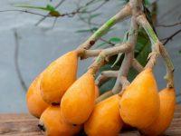 ビワは種も葉も健康に良い!? 知られざる効能と食べ方、保存方法をお届け