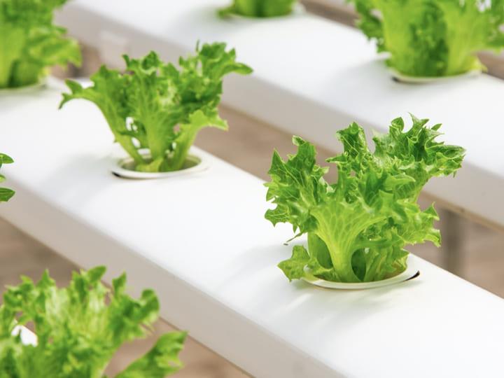 コロナの影響でシンガポールの農業が発展する?! 食料自給率改善の方法とは?