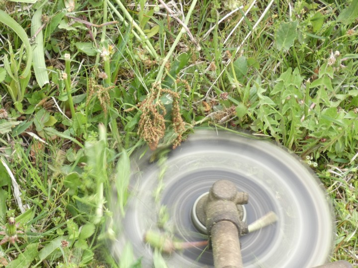 ズバリ! 草刈り初心者必見「迷わないで刈払機を選ぶ方法」