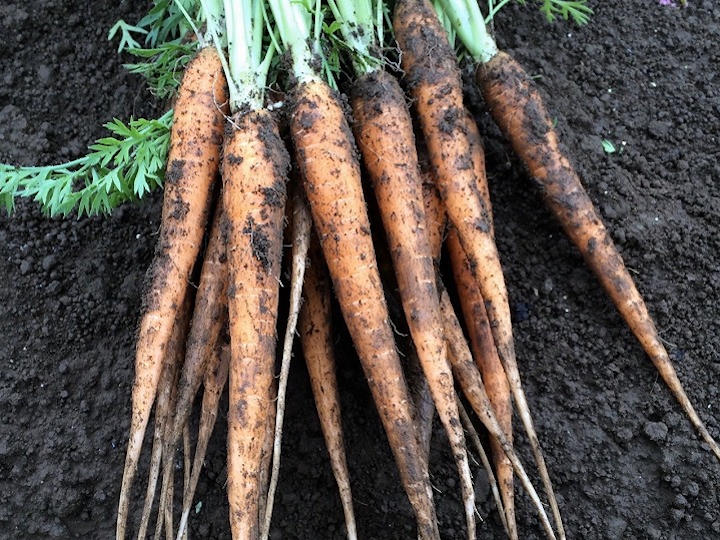 皿に合わせて野菜を作る? 間引き菜を商品にする方法