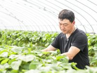 鉾田のイチゴを日本一に!その鍵はCO<SUB>2</SUB>施策?クラウド管理×効率的施用で高品質・高収量を実現!