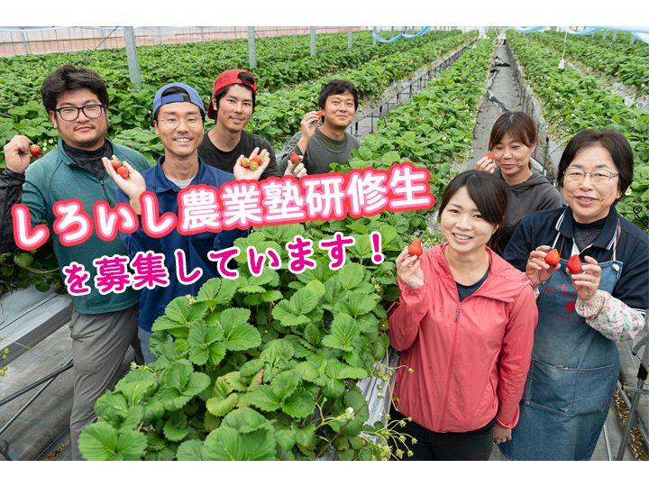 【佐賀県白石町】充実の就農支援&豊かな自然に囲まれて、イチゴ農家になりませんか?