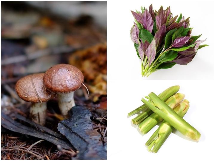 実りの秋の新顔野菜は「金時草」「マコモダケ」「落葉きのこ」