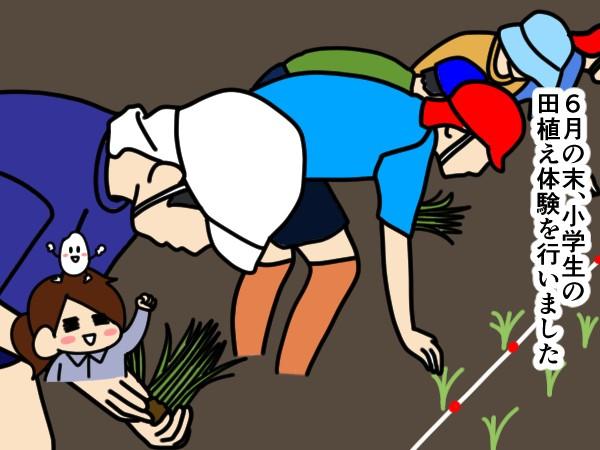 漫画「跡取りまごの百姓日記」【第67話】効率重視?の田植え体験