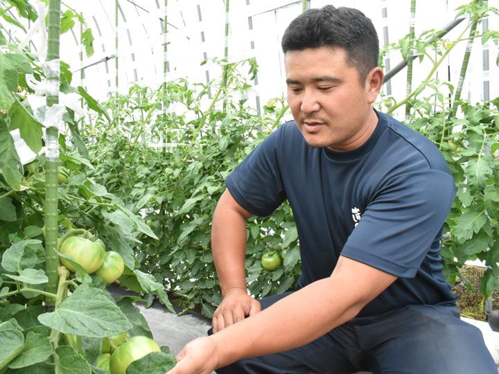 福島県南会津郡の『株式会社とまっteファーム』の馬場さんと、栽培中の南郷トマト
